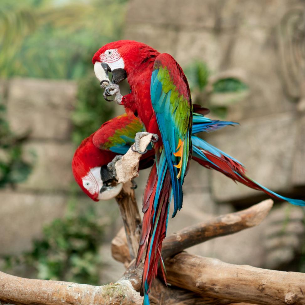 Экзотариум в Минском зоопарке