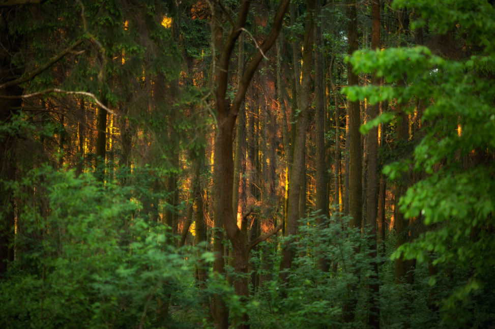 закат в лесопарке медвежино